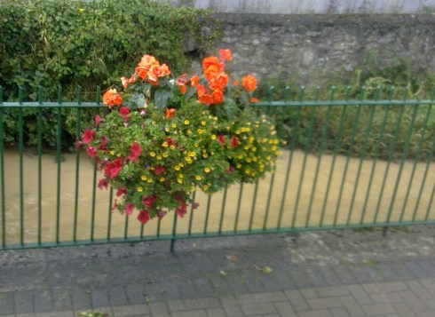 Flowers in Portlaoise